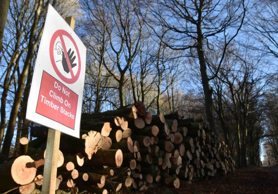 Stack of logs with warning sign saying 'do not climb on timber stack'.